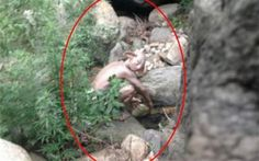 Pictured: Mystery 'MONSTER' spotted near Great Wall of China resembles Lord of the Rings' Gollum The Stranger, Aliens, Duende Real, Ufo, Mystery, Pseudo Science, Unexplained Mysteries, Bizarre, Monster S