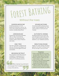 Forest Bathe Without the Trees: 7 Ways to Try NOW - Forest Bathing Central Benefits Of Forest, Shinrin Yoku, Cypress Essential Oil, Forest Bathing, Mood Enhancers, Forest School, Alternative Medicine, Alternative Health, Art Therapy