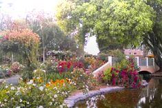 Garden Valley Ranch: Specializing in ROSES!  Tours available to see beautiful, distinctive, and interesting gardens. Peak bloom is Mid-May through June, with the fields blooming May through early November, but something blooming all through the year.  498 Pepper Road, Petaluma, CA 94956