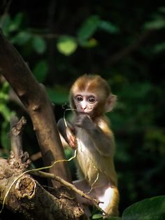 Baby monkey by Devender meena on 500px
