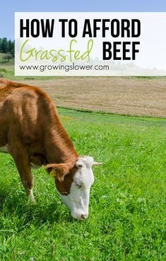 Everything you need to know about buying Grassfed beef in bulk from the farmer to save money, from how much meat to expect from a quarter cow or a half, how much it's going to cost, and where to find a farmer in your area.