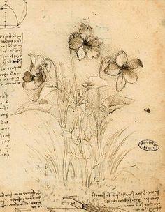 Leonardo da Vinci - Study of Violets via girlinlondon