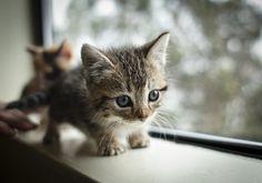 AH so cute.