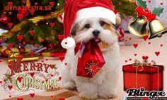 Shop powered by PrestaShop Dogs, Animals, Animales, Animaux, Pet Dogs, Doggies, Animal, Animais