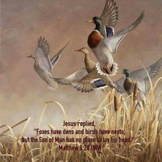 """Jesus replied, """"Foxes have dens and birds have nests, but the Son of Man has no place to lay his head. Wildlife Paintings, Wildlife Art, Bird Paintings, Book Of Matthew, Bird Pictures, Sports Art, Outdoor Art, Bird Prints, Birds"""