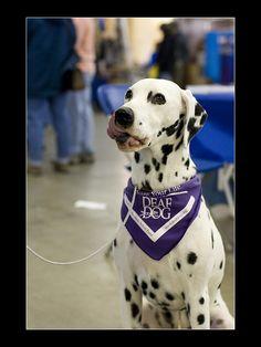 DeviantArt - The Largest Online Art Gallery and Community I Love Dogs, Puppy Love, Sign Solutions, Deaf Children, Deaf Dog, British Sign Language, Dalmatian Dogs, Deaf Culture, Bsl