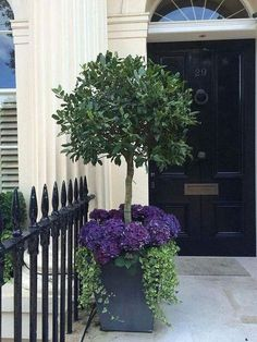 Beautiful topiary front door planter with hydrangeas Front Door Plants, Front Porch Flowers, Bay Tree Front Door, Front Of House Plants, Planters For Front Porch, Front Garden Entrance, Front Garden Ideas Driveway, Small Entrance, Front Courtyard