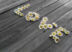 Find images and videos about love, flowers and daisy on We Heart It - the app to get lost in what you love. Want To Be Loved, Love Is All, Peace And Love, Daisy Love, Daisy Girl, Deco Floral, Arte Floral, Happy Flowers, Beautiful Flowers