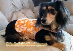 Tootsie-longhair-dachshund. Love the Mango Hawaiian print. And the ruffle too!