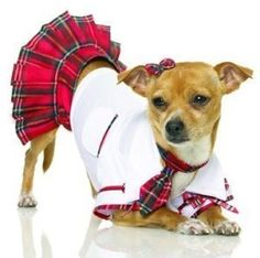 $8.99-$17.99 Pet X-Small - Cute Little School Puppy Costume - This Little outfit is a great conversation piece and fun for Halloween Too! http://www.amazon.com/dp/B001VAF5RQ/?tag=pin2pet-20