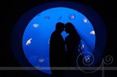 @Monterey Starkey Bay Aquarium Wedding Portrait