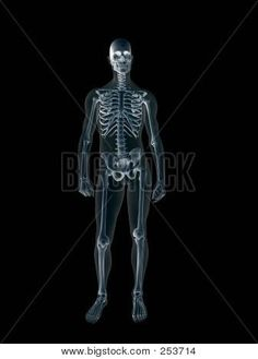 ray whole body MoreX Ray Whole Body