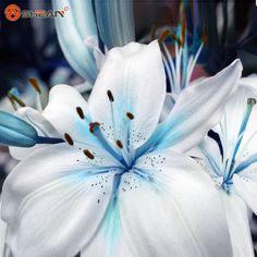 Ofertas Corazón Azul Lirio de Semillas de Plantas En Maceta Bonsai Planta de Flor de Lirio Semillas para Jardín 50 Partículas/lot