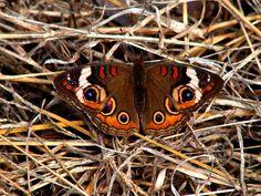 Butterfly II by ~Sharondipity on deviantART