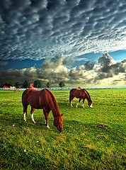 Grazing in the fields, beneath the western sky, clouds up above, look down from on high.