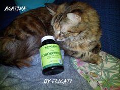 Clorofilla e alga klamath per cani e gatti
