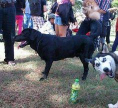 """bahahaha! who knew animals """"photo bombed"""" too! :)"""
