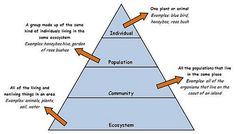 KB- I think this graphic is an extremely helpful tool in showing the students the breakdown from Ecosystem to Individual and helping them understand the steps in between.