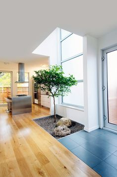Indoor tree--Is this really a good idea? What happens when it grows to the ceiling? Will the roots cause the hardwood floor to buckle as they grow? Do I have to mulch around it twice a year? How many times a day will I fall into the pit it's planted in? Will I have to sweep acorns in my house? Maybe I'll stick with my potted ficus.