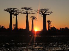 Baobab Avenue, - via The Wandering Soles Round The World Trip, Our World, World Traveler, Madagascar, Us Travel, Cool Photos, Sunset, Outdoor, Outdoors