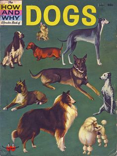 How and Why Wonder Book of Dogs, one of my first dog books Dog Books, Animal Books, Vintage Children's Books, Vintage Kids, Antique Books, Ladybird Books, Wonder Book, Little Golden Books, Cute Illustration