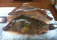 Wild Hog Fish