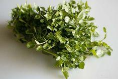 最強の野菜は何?栄養素密度ランキングで1位に輝いたのは「クレソン」(米研究)