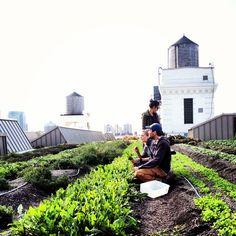 Brooklyn Grange Rooftop Farm. These guys are so cool! pinned by @dakwaarde
