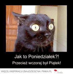 niezła była impreza' użytkownika Janusz S. Anxiety Cat, Funny Cartoons, Funny Memes, Funny Gifs, Memes Humor, Polish Memes, Drake And Josh, Friday Humor, Funny Friday