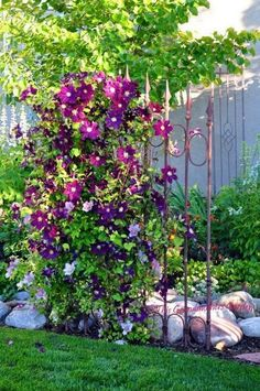 A garden trellis is an excellent way to support plants and flowers while adding structure and decorative flair to your landscape. #gardenvinesbeautiful #gardenvinestrellis
