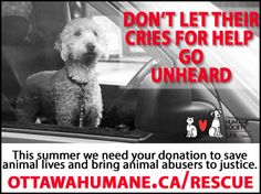 Safety First, We Need You, Save Animals, Cry For Help, Summer Heat, Humane Society, Bring It On, Feelings, Pets