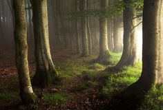 The limits of the woods, Basque country, Spain by Dani Martin