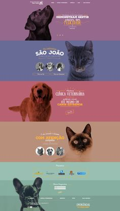 Site Veterinária São João on Behance