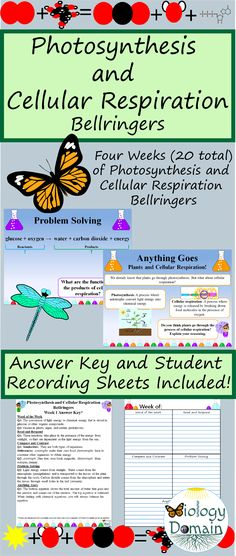 4 wks of Photosynthesis and Cell Respiration Bellringers Warm Ups and Answers Cell Respiration, Photosynthesis And Cellular Respiration, Ecological Pyramid, Bell Ringers, Recording Sheets, Ecology, Problem Solving, Student, Warm