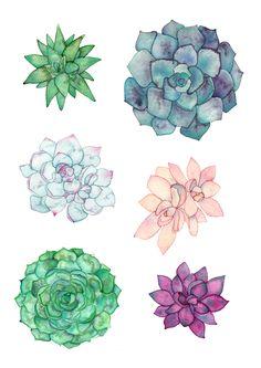 Succulents Elena O'Neill
