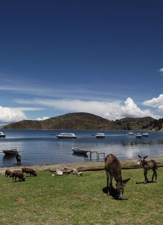 Something for the donkeys... Lake Titicaca: Copacabana and the Isla del Sol.
