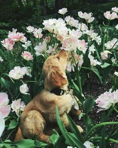 How cute is this doggy taking a sniff of these beautiful pink flowers?