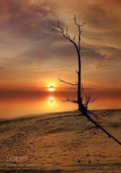 like an alone tree by idrusarsyad