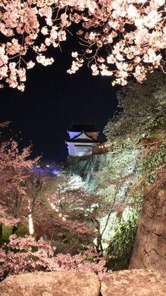 39:「鶴山公園ならではの天守閣と石垣、そして桜のコラボレーションが素敵です。 夜間のライトアップは昼間とはまた一味違った幻想的な雰囲気が楽しめます。」@鶴山公園