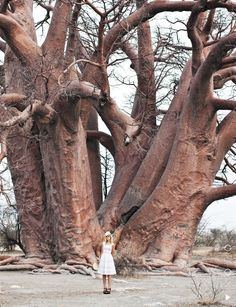 Wow!  Imagine how old this tree is?