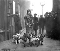 A stylish woman arrives with her pack of dogs at the French Open Bull Dog Show in Marylebone