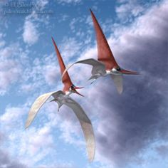 NYCTOSAURUS | Nyctosaurus sp.