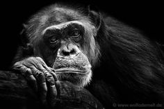 Animal Photography by Wolf Ademeit_2