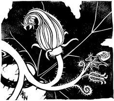 Zucchini squash blossom by Anne E. Black and white, block print Black And White Landscape, Linoprint, Clay Flowers, Landscape Prints, Linocut Prints, Blue Bird, Light In The Dark, Graphic Art, Print Patterns