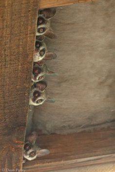 Bush babies Monkey Sanctuary offer Monkey Tours for the family where you can see Free-living monkeys in a natural and wild environment! at Hartebeespoortdam, South Africa next to the Elephant Sanctuary North West Province, Elephant Sanctuary, Living Environment, Create Awareness, Primates, Baby Sleep, Cool Things To Make, Squirrel, Monkey