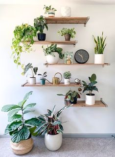 Living Room Plants, Room With Plants, House Plants Decor, Bedroom Plants, Plant Decor, Indoor Plant Wall, Indoor Plants, Indoor Plant Shelves, Shelves With Plants