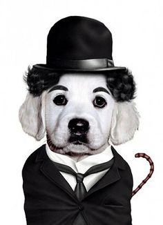 Charlie Chaplin.. I will make one of our golden pups charlie for Halloween .  @Kerry Duker
