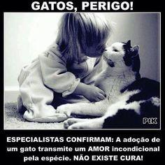 AMOR E ALEGRIA PRA SEMPRE! #gato #amogatos #petmeupet #maedepet