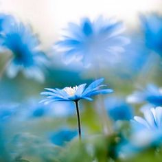 #flowers #blue #photography #nature