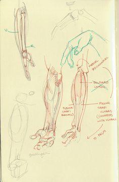 Arakaki-dessin-anatomie-humaine_11